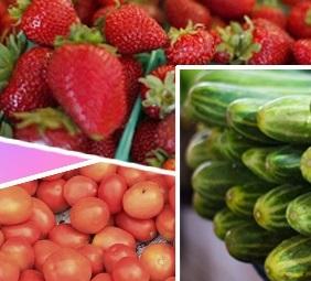 vegetable-080521